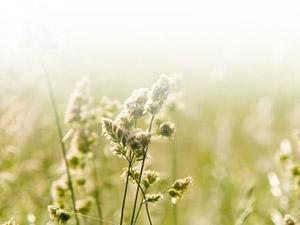skola_homeopatije_upis-2014